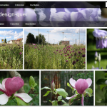 Fotostream von flickr